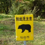 beware of bear