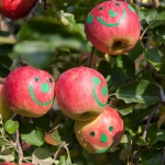 Apples with smiley faces