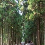 Path to Zuiganji's main hall